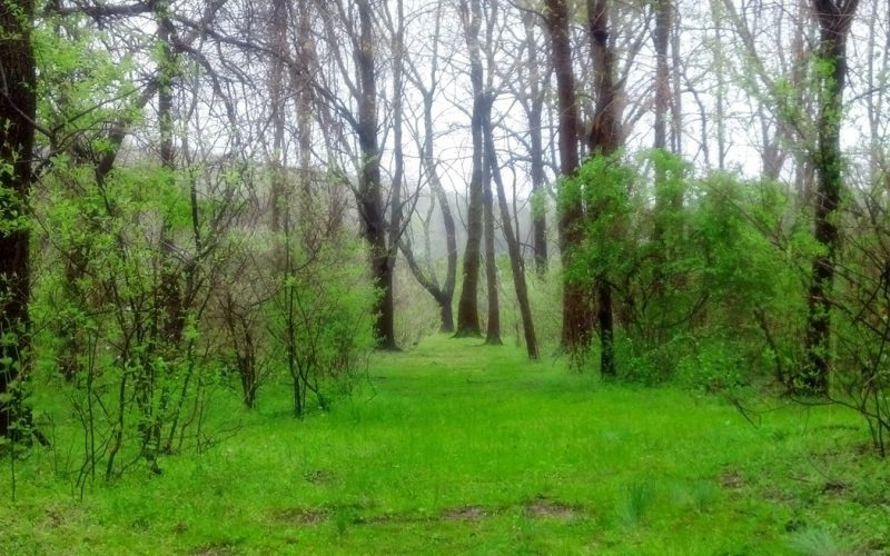 A rainy day in the woods.