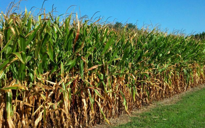 Header image for 'Let Progressives Despise Rural America. It's in Our Best Interests.'